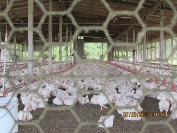 Belize Poultry Association_19